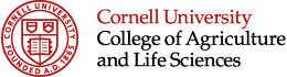 Cornell University 2017-2018 Essay Prompts and Examples